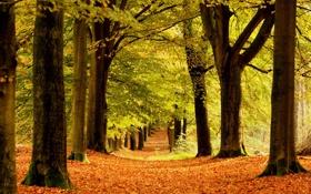 Картинка осень, деревья, природа, стволы, листва, аллея