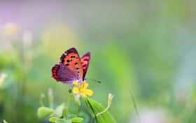 Обои трава, цветы, бабочка