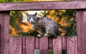 Картинка кошка, взгляд, забор