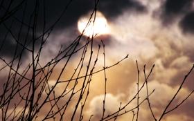 Обои ночь, природа, луна, растения, месяц, фотографии