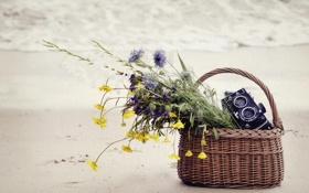 Обои песок, море, цветы, корзина, фотоаппарат, корзинка, полевые