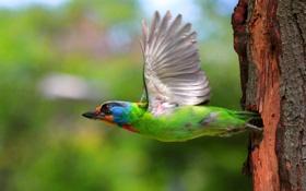 Картинка полет, птица, крылья