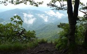 Обои горы, ветки, дымка