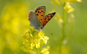 Картинка цветок, лето, макро, желтый, природа, бабочка, насекомое