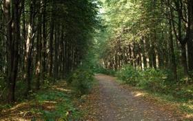 Обои лето, листья, деревья, природа, растения, тропинка