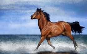 Картинка море, небо, взгляд, вода, облака, брызги, лошадь