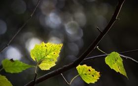 Обои листья, макро, ветка, зелёный