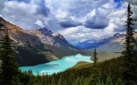 Картинка лес, горы, природа, озеро, Banff National Park, Canada, Peyto Lake