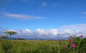 Картинка поле, небо, трава, облака, цветы