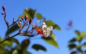 Обои цветок, лето, небо, природа, веточка, бабочка, крылья