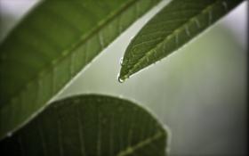 Картинка листья, листок, зелёный, листки, макро фото, фоновые обои