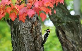 Картинка осень, дерево, птица