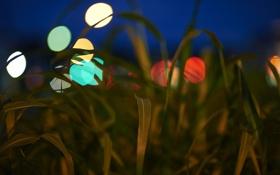Обои трава, листья, природа, огни, вечер, блик