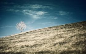 Картинка деревья, пейзаж, горы, природа, дерево, холмы, спуск