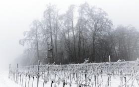 Картинка зима, сад, вышка, мгла