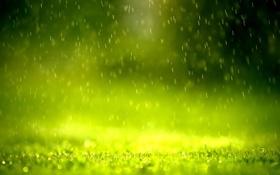 Обои хорошая погода, детали, дождь, утро, Зелень