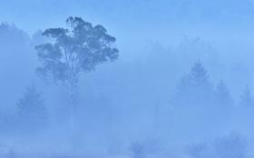 Картинка лес, деревья, туман, дымка