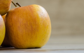 Обои яблоки, желтые, фрукт