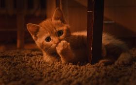 Картинка котёнок, Кот, кошка