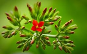 Обои цветок, зелень, ветки, фон, красный
