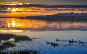 Обои закат, птица, вода