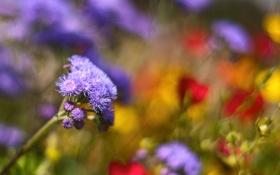Картинка поляна, много, rainbow meadow