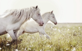Обои поле, природа, кони