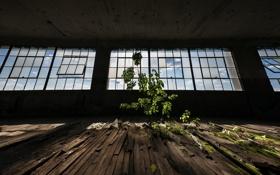 Обои дерево, окна, зал