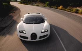 Картинка Авто, Дорога, Белый, Bugatti, Асфальт, Капот, День