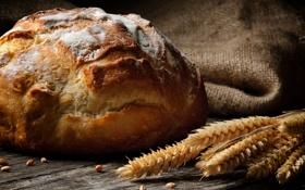 Картинка колосья, белый, круглый, зерна, пшеница, хлеб