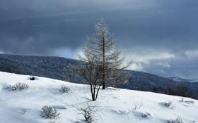 Картинка зима, небо, облака, снег, горы, дерево