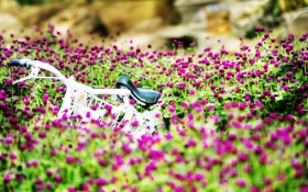 Картинка лето, цветы, велосипед, фон, обои, настроения, красиво