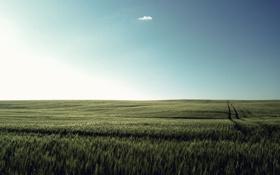 Картинка небо, трава, облако, луг, тишь, солнечный_день