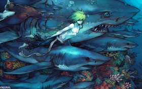 Картинка аниме, акулы, поньо, подводный мир, мужчина, море