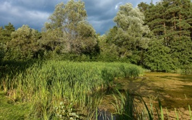 Картинка зелень, лес, лето, трава, солнце, деревья, тучи