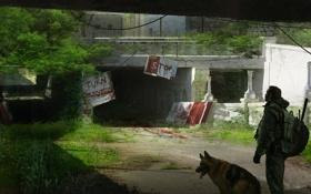 Картинка город, апокалипсис, человек, собака