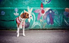 Обои настроение, собака, шарф