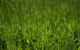 Обои зелень, лето, трава, природа, фото, весна, зелёный