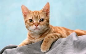 Картинка кот, полосатый, рыжий, взгляд