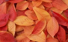 Обои листья, макро, обои