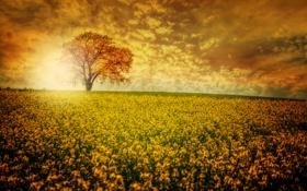 Обои поле, Дерево, цветы