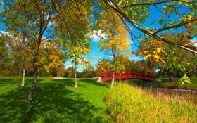 Обои багрянец, листья, осень, деревья, мостик, парк