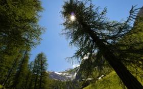 Обои деревья, горы, Солнце, блики, Швейцария