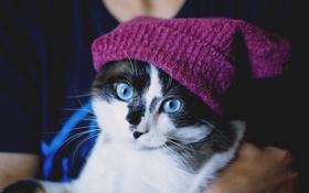 Обои голубоглазая, шапочка, взгляд, кошка