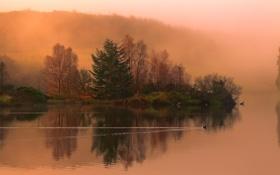 Картинка осень, лес, природа, река, утка