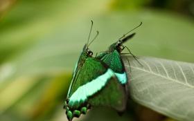 Картинка макро, бабочки, насекомые, природа, листок, nature, macro