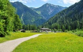 Картинка трава, пейзаж, горы, природа, Австрия, Tyrol, Eben am Achensee