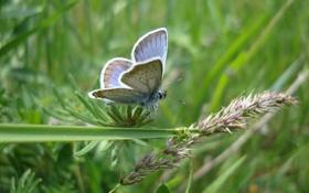 Обои бабочка, трава, лето