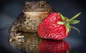 Обои макро, клубника, ягода, противоположности, жаба, прекрасное и ужасное
