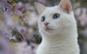 Обои белый, глаза, кот, цветы, природа, растения, голубые